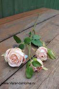 Роза кустовая пурпурная